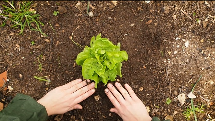 kesehatan dan keselamatan kerja pada pembibitan tanaman